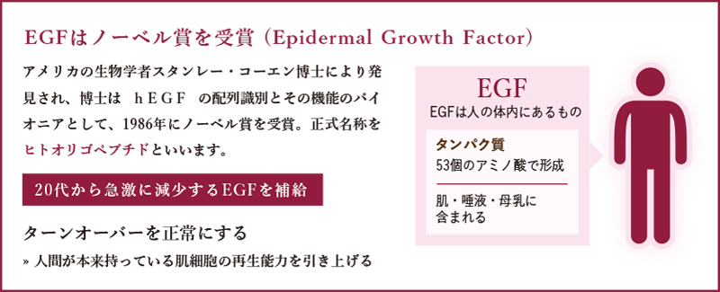 EGFはノーベル賞を受賞 (Epidermal Growth Factor)